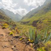 Tenerife34